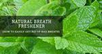 Natural breathe freshener