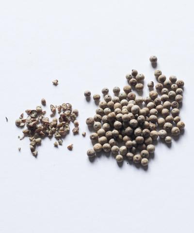 grains de poivre blanc